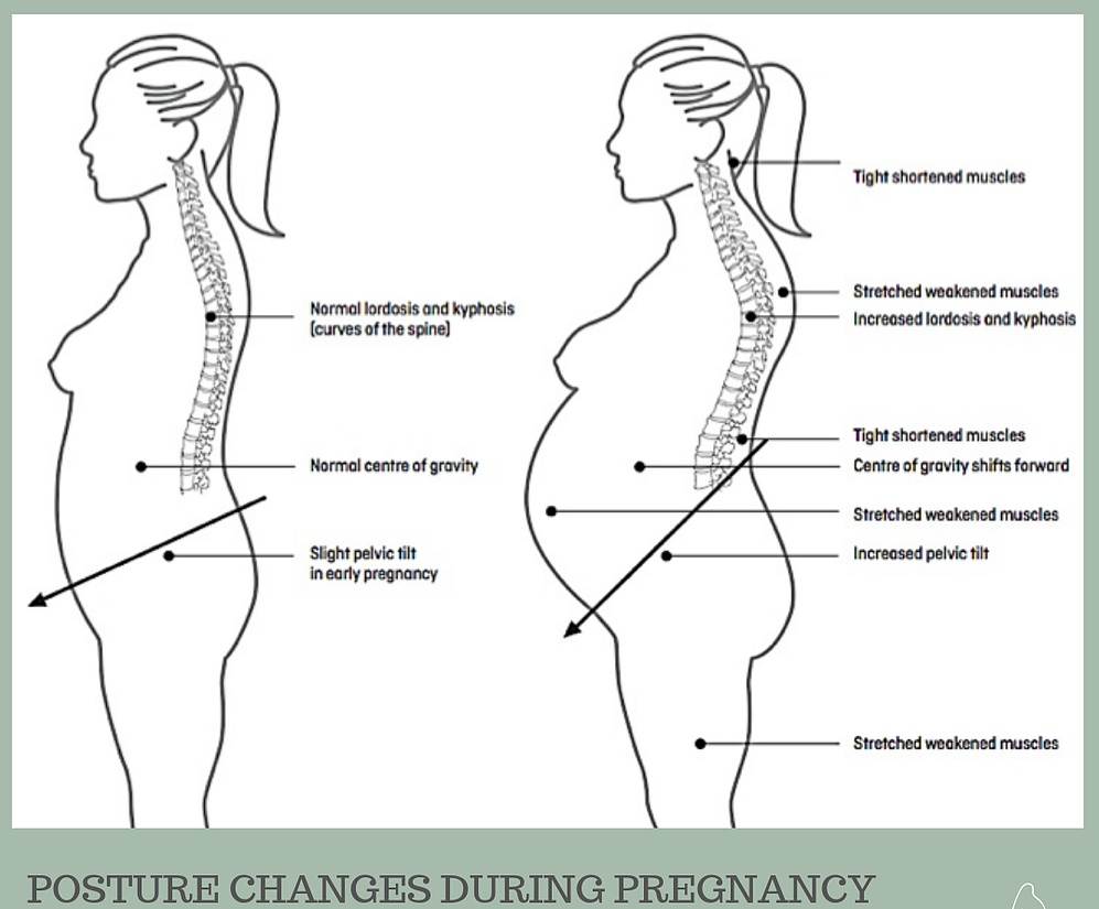 Diagram of a woman and the bodily changes she will experience during pregnancy